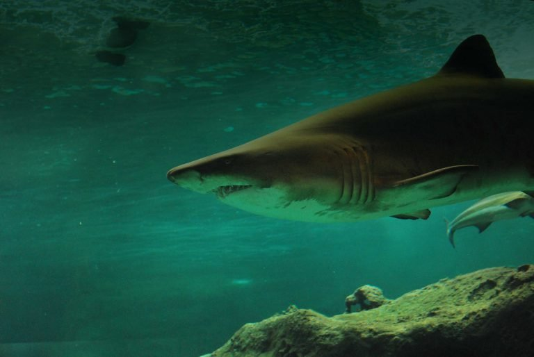MC Consulting | Swimming with sharks or dolphins - sea, underwater, insight